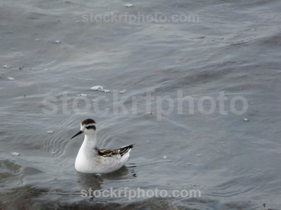 Waterfowl on the seashore.