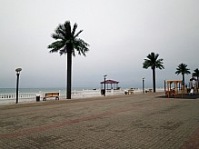Artificial palm trees on the promenade.